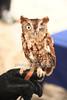 Martino the Owl<br /> photo by Rob Rich/SocietyAllure.com © 2012 robwayne1@aol.com 516-676-3939