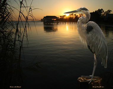 """Heron in the sunset"", composite photo, Gulf Breeze, Florida"