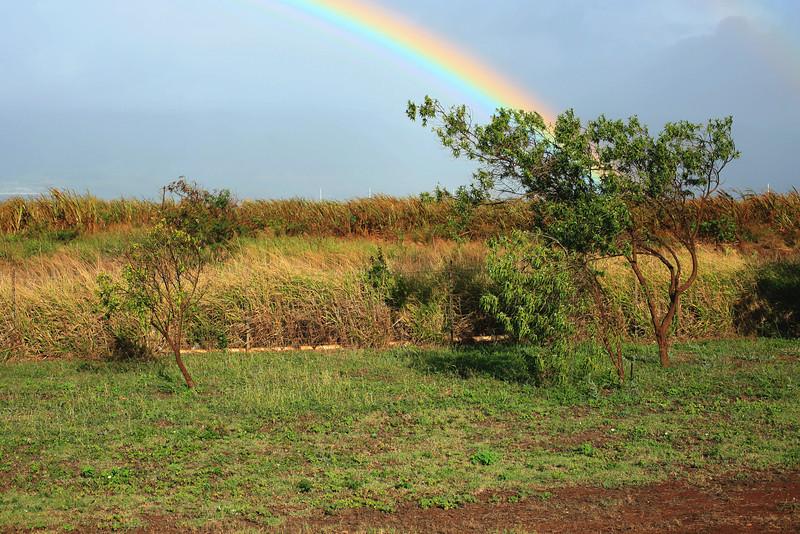 Rainbow over the sugar cane