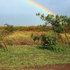 Rainbow over the sugar cane