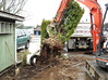 Removing existing shrubs to make room for parking