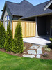 Privacy created with cedar fencing and evergreen trees