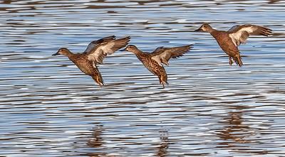 Synchronized landing!!