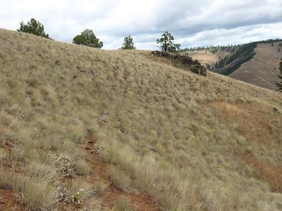 Joseph Canyon Roadless Area hike