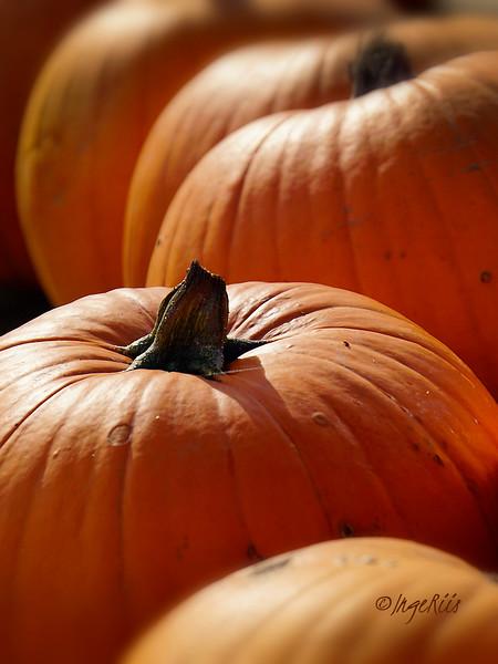 Pumpkin - Inge