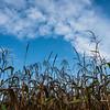 Corn Field & Sky