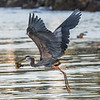 Barry T.  Heron Feed.