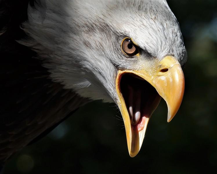 Lynda Stevens-Bald Eagle