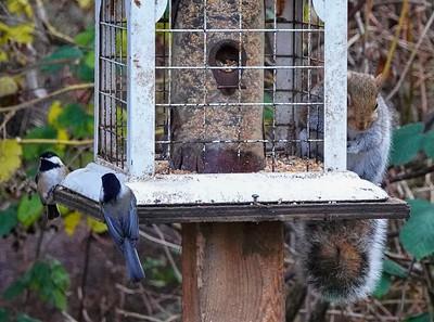 Squirrel At The Bird Feeder