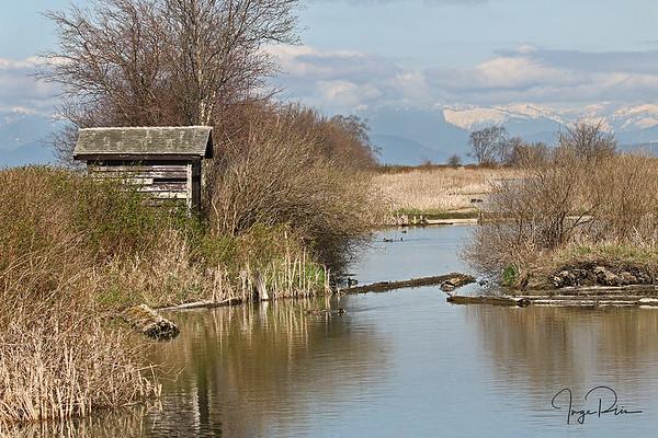 Reifel's bird sanctuary