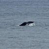 Whale's Tail-Lynda Stevens