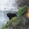 Black 'Stamp' Bear