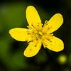 Wild Flower Barry T.