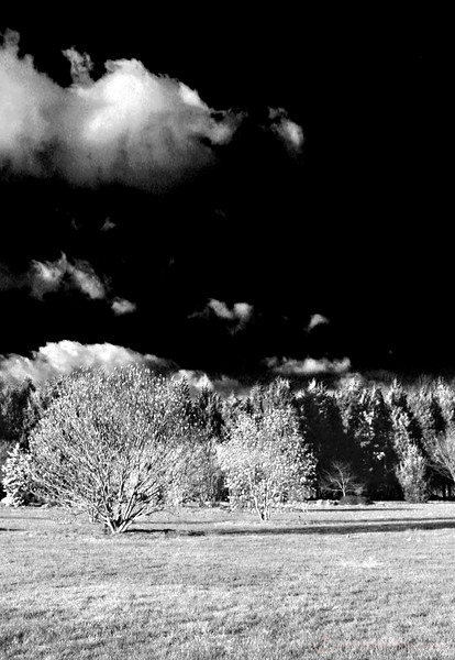 Faux IR (infrared) Photography