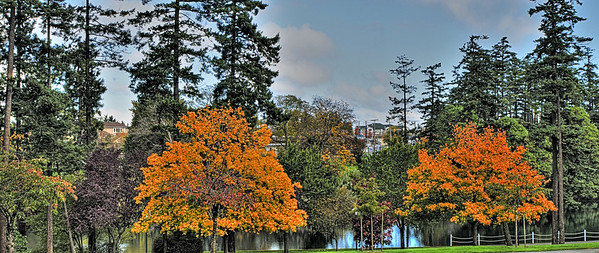These twin trees made for a fantastic subject to capture in our local park in Victoria, BC, Canada.  Autumn is setting upon us quickly, and the trees are becoming vivid and vibrant with their colors.