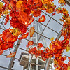 Dale Chihuly Glass Gallery