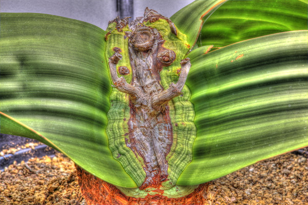 Plants in Captivity: HDR