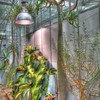 HDR manipulated plants by Nick Shiflet