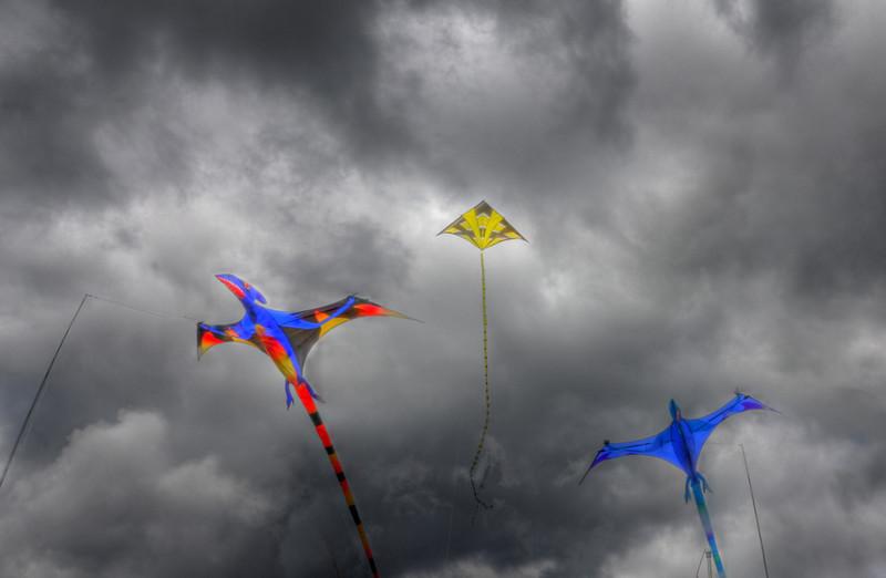 2011 Skagit Valley, Mt. Vernon Tulip Festival, by Nick Shiflet in High Dynamic Range, HDR