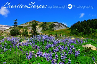 Mount Ranier National Park Washington