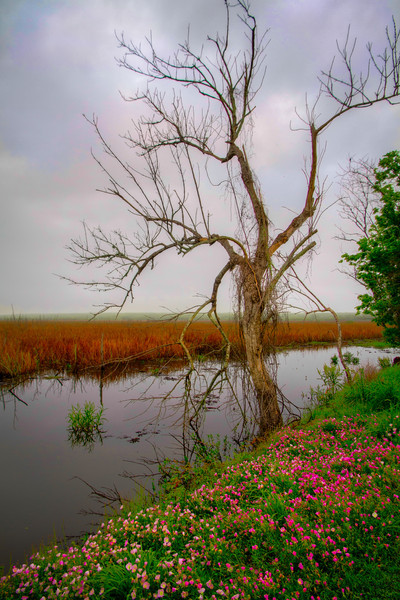 The Swamp Tree<br /> Brazos Bend State Park is a great place to visit, but you don't want to live there. It's a protected wetlands, complete with swamps, marshes and all the animals that live in them. If you go away without seeing a crocodile, then you didn't get out of the car.