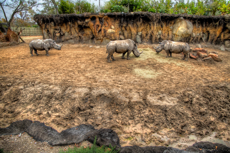 The Outcast<br /> It was crowded at the zoo, so I gave up my spot and had just walked away after taking this photo, when the rhinoceros on the left slowly approached the two eating. The center rhino charged the visitor and prevented him from joining their meal. The lonely outcast was forced to seek a different spot to graze by himself. <br /> It just goes to show you not everyone is going to be nice to you and don't be so quick to give up your front spot at the zoo, no matter how many kids you might be blocking.