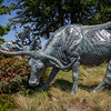 A Cowboy Finds His Longhorn
