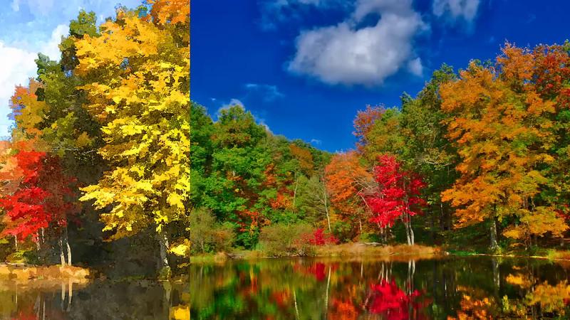 A Look Back at Fall_2015
