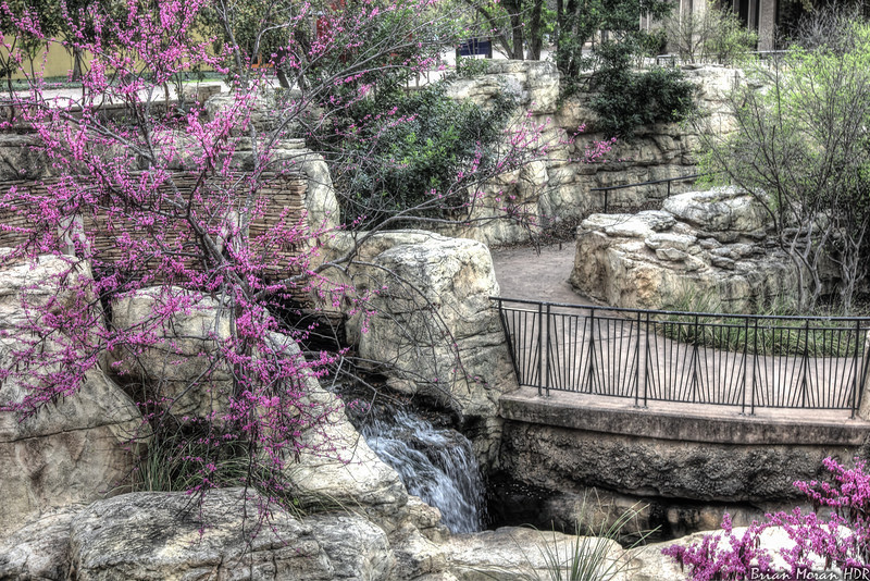 """Pink flowers and waterfall, as seen from the landing outside of the Henry B. Gonzalez Convention Center in San Antonio, Texas, during early March 2011.<br /> <br /> If you would like to read more about this photo, please visit my blog post:<br /> <br /> <br />  <a href=""""http://brianmoranhdr.blogspot.com/2011/10/pink-riverwalk.html"""">http://brianmoranhdr.blogspot.com/2011/10/pink-riverwalk.html</a>"""