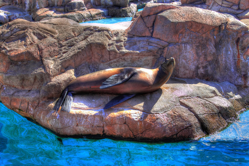 A relaxing sea lion at Sea World, San Antonio
