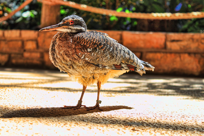 A bird in the middle of the Hixon Bird House at the San Antonio Zoo in San Antonio, Texas