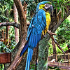 A parrot at the Alligator Farm, St. Augustine, Florida