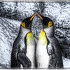 "A pair of penguins during mating season at Sea World San Antonio, located in San Antonio, Texas.<br /> <br /> For more on this photo, please visit my blog post:<br /> <br /> <br />  <a href=""http://brianmoranhdr.blogspot.com/2011/02/example-of-silver-efex-pro-2.html"">http://brianmoranhdr.blogspot.com/2011/02/example-of-silver-efex-pro-2.html</a>"