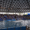 """Whale jumping toward the suspended """"Believe"""" ball during the Believe show at Sea World San Antonio in San Antonio, Texas.<br /> <br /> For more on this photo please visit my blog post:<br /> <br /> <br />  <a href=""""http://brianmoranhdr.blogspot.com/2011/02/sea-world-san-antonio-animal.html"""">http://brianmoranhdr.blogspot.com/2011/02/sea-world-san-antonio-animal.html</a>"""