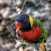 """A colorful lorikeet in the Lorikeet Feeding Area at Sea World San Antonio, located in San Antonio, Texas.<br /> <br /> For more on this photo, please visit my blog post:<br /> <br /> <br />  <a href=""""http://brianmoranhdr.blogspot.com/2011/02/sea-world-san-antonio-animal.html"""">http://brianmoranhdr.blogspot.com/2011/02/sea-world-san-antonio-animal.html</a>"""