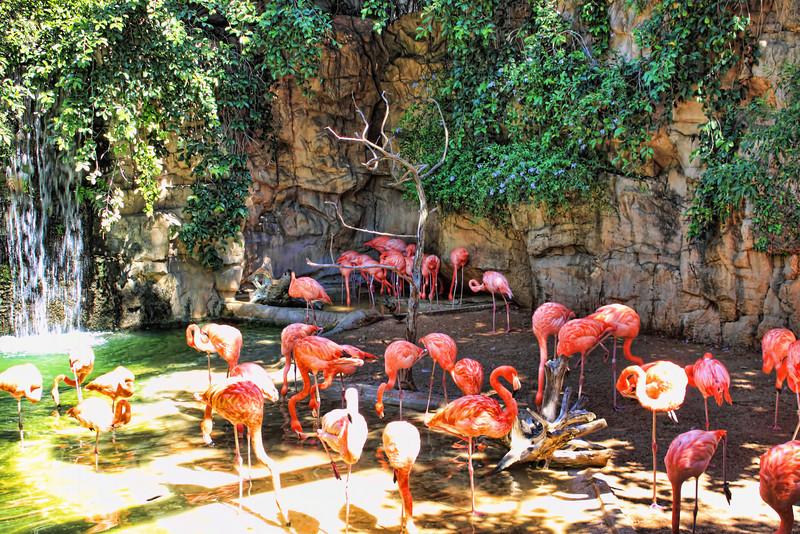 Flamingos near the entrance of the San Antonio Zoo, located in San Antonio, Texas