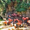Flamingos near the entrance of the San Antonio Zoo, located in San Antonio, Texas