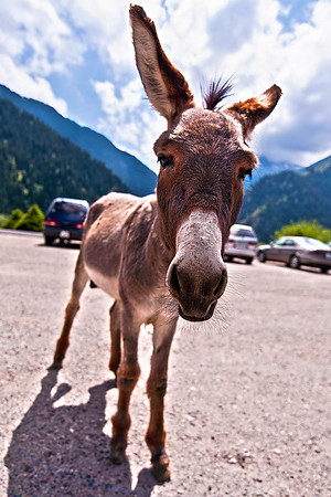 Donkey, the Parking Lot Attendant