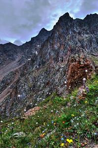 Alpine Flowers  http://sillymonkeyphoto.com