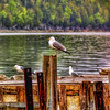 Seagull Pier