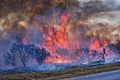 New Forest - Controlled Burning