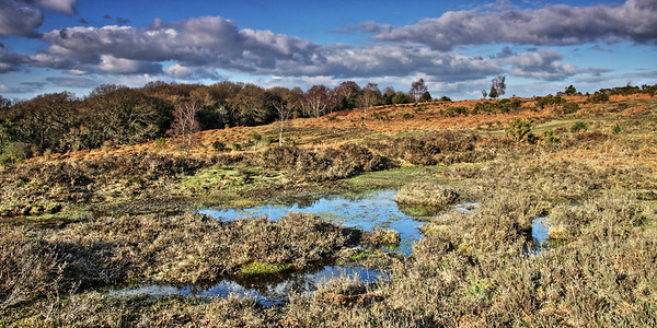 Early evenng at  Broomy Walk in the New Forest