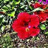 WJB__2013_07_25_0008_09_10_tonemapped