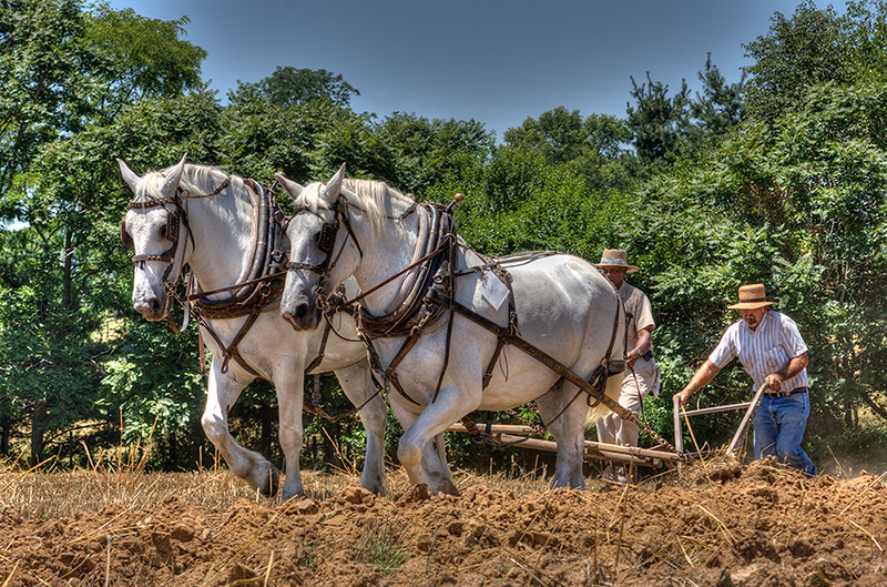 Plowing The Old Fashion Way