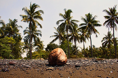 Bali Coconut at the Beach