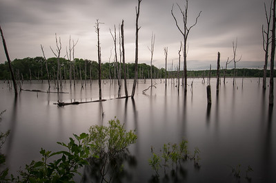 Manasquan Reservoir  June 2013