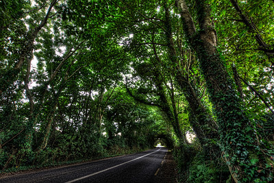 Ireland Countryside Lane
