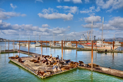 Sea lions and fishing boats
