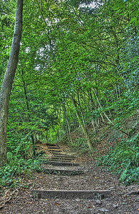The steps up to Yat rock from Symond's Yat East