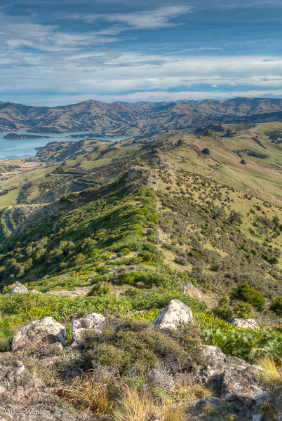 Looking down the spine of the mountain from the top of the Otepatotu Scenic Reserve Trail.
